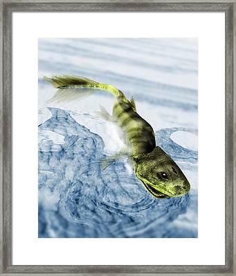 Tiktaalik Prehistoric Fish, Artwork Framed Print