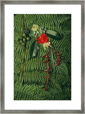 Tropical Seeds And Flowers Of The Cloud Framed Print