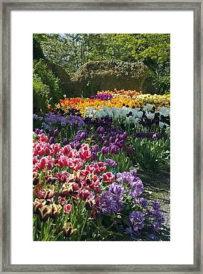 Tulip (tulipa Sp.) Borders Framed Print by Dr Keith Wheeler