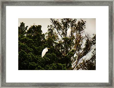 Untitled Framed Print by Michael Ray