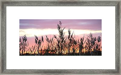 Untitled Framed Print by Rebecca Powers