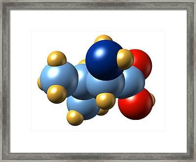 Valine, Molecular Model Framed Print