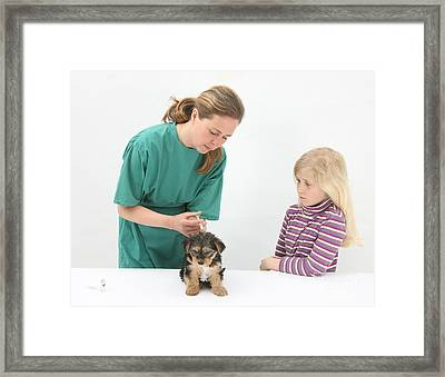 Vet Giving Pup Its Primary Vaccination Framed Print by Mark Taylor