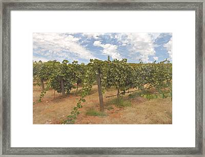Vineyard Blue Sky Framed Print