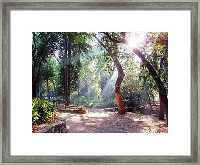 Walk In The Park Framed Print by Randy Sprout