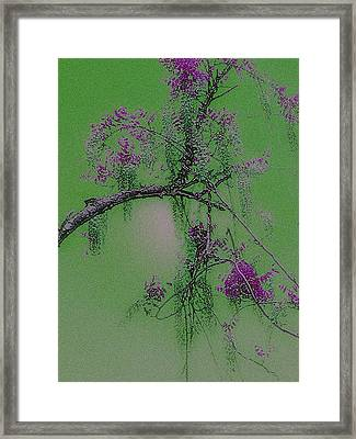 Framed Print featuring the photograph Wisteria by Holly Martinson