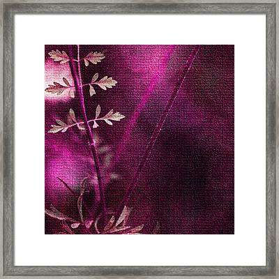 Wonderment Framed Print by Bonnie Bruno