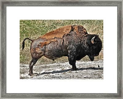Yellowstone Framed Print by Arturo Padilla