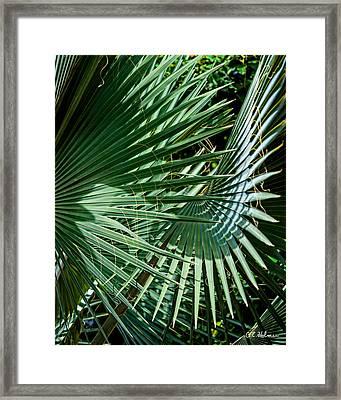 20120915-dsc09902 Framed Print by Christopher Holmes