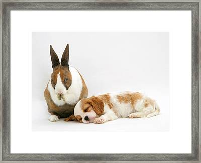 Rabbit And Puppy Framed Print by Jane Burton