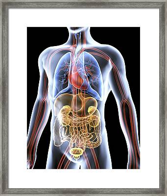 Human Anatomy, Artwork Framed Print by Pasieka