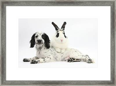 Puppy And Rabbit Framed Print by Mark Taylor