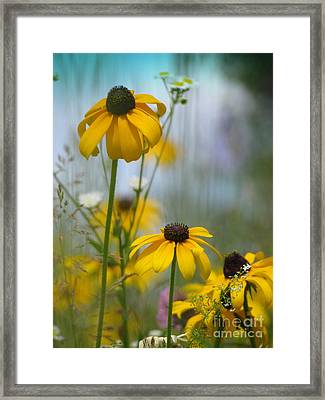 Wildflowers Framed Print by France Laliberte