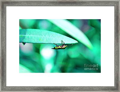 Nature And Wildlife Series Framed Print by Terry Troupe