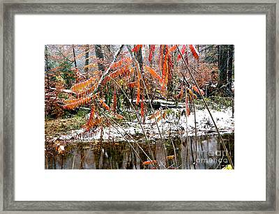 Autumn Snow Monongahela National Forest Framed Print by Thomas R Fletcher