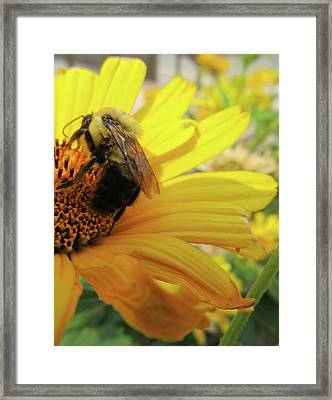 Bee Framed Print by Michele Caporaso