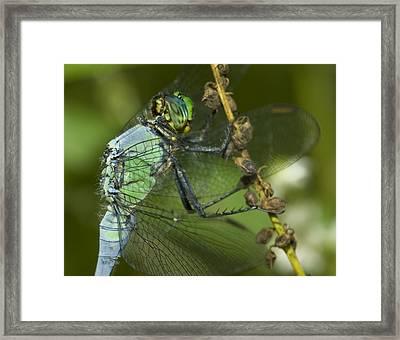 Macro Framed Print by Jack Zulli