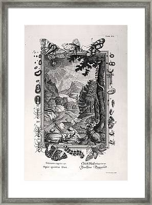 1731 Johann Scheuchzer Creation 5th Day Framed Print by Paul D Stewart