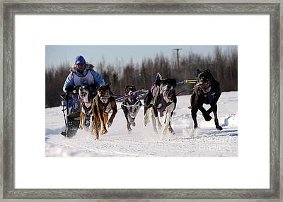 2011 Limited North American Sled Dog Race Framed Print