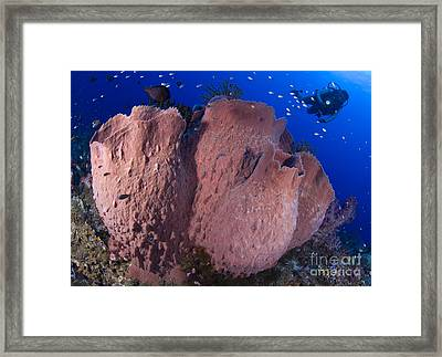 A Diver Looks On At A Giant Barrel Framed Print by Steve Jones