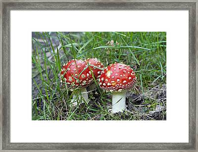 Amanita Muscaria Framed Print by Michal Boubin