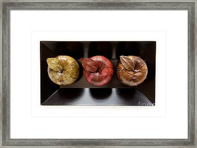 3 Apples Framed Print by Igor Kislev