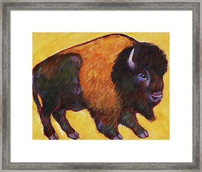 Big Buffalo  Framed Print