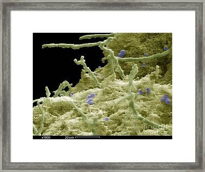 Blue Cheese Framed Print by Ted Kinsman