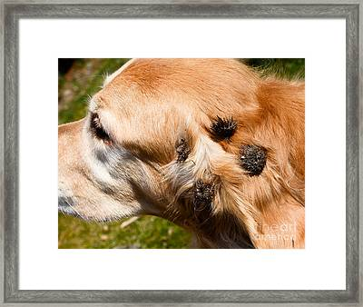 Burdock Burs Framed Print