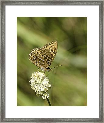 Framed Print featuring the photograph Butterfly by Betty Depee