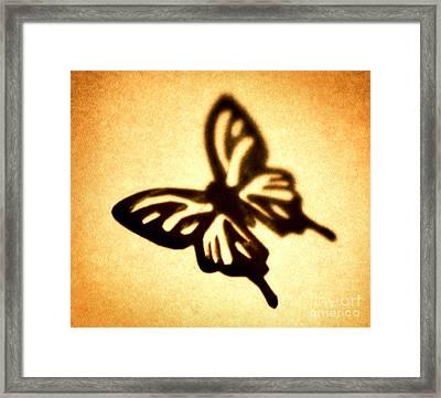 Butterfly Framed Print by Tony Cordoza