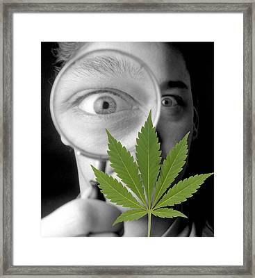 Cannabis Research Framed Print by Victor De Schwanberg