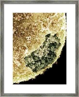 Cell Nucleus, Sem Framed Print by