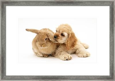 Cocker Spaniel And Rabbit Framed Print