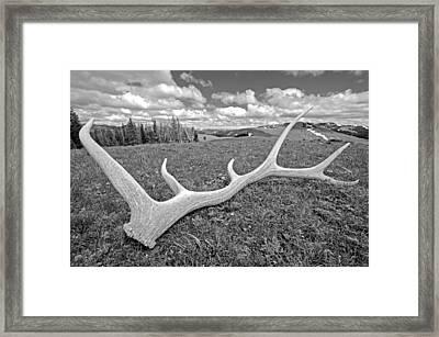 Elk Framed Print by Elijah Weber