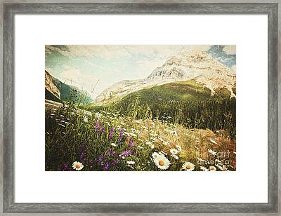 Field Of Daisies And Wild Flowers Framed Print