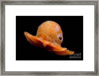 Flapjack Octopus Framed Print