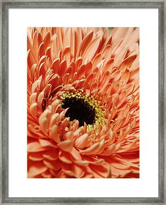 Flower Close Up Framed Print by Ignaz Uri