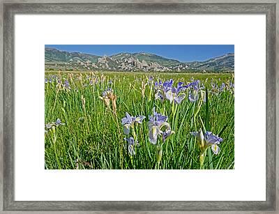 Flowers Framed Print by Elijah Weber