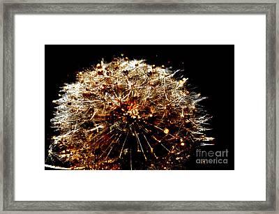 Golden Flower Framed Print