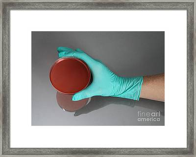 Hand Holding Petri Dish Framed Print by Photo Researchers