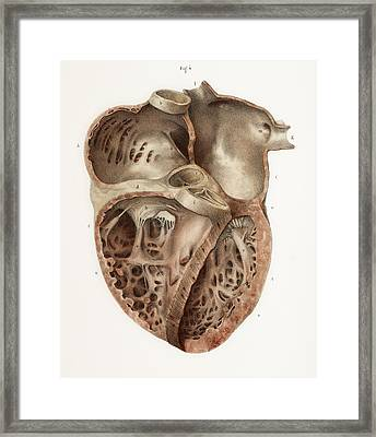Heart Anatomy, 19th Century Illustration Framed Print by