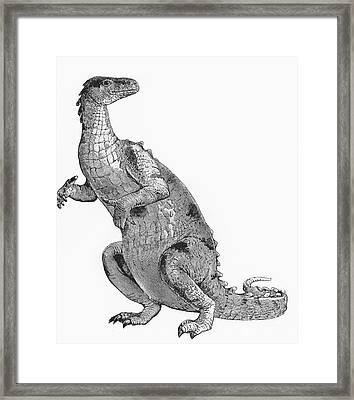 Iguanodon, Mesozoic Dinosaur Framed Print by Science Source