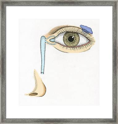 Illustration Of Tear Duct Framed Print by Science Source