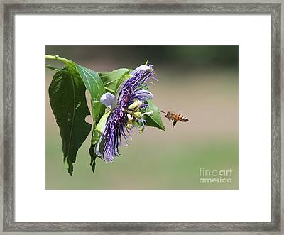 Insects Framed Print by Jack R Brock