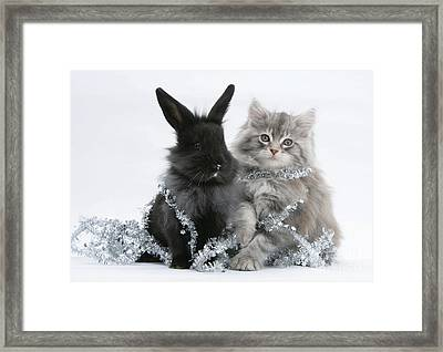 Kitten And Rabbit Getting Into Tinsel Framed Print by Mark Taylor