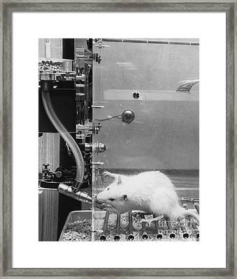 Lab Rat Framed Print by Omikron
