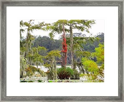 Lake Martin Scene Framed Print by Betty Berard