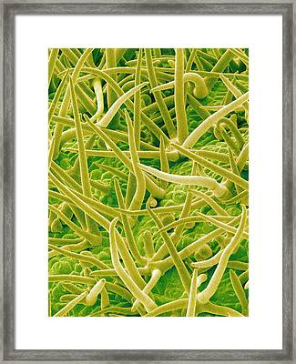 Leaf Surface, Sem Framed Print