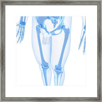 Leg Bones, Artwork Framed Print by Sciepro